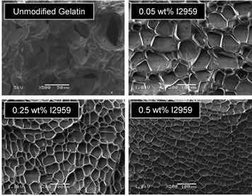 Tunable Microporous Photocrosslinking of Gelatin Macromers to Synthesize Porous Hydrogels that Promote Valvular Interstitial Cell Function